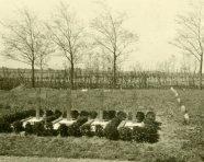 begraafplaatsen slachtoffers neergeschoten vliegtuig in WOII (foto 196