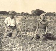 1940, aardappelzoeken op de achtergrond de Oudebildtdijk